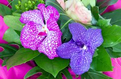 Ramo de orquídeas Imágenes de archivo libres de regalías