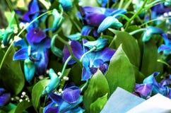 Ramo de orquídeas azules Fotografía de archivo