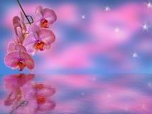 Ramo de orquídeas de color de malva fotografía de archivo