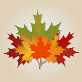 Ramo de otoño stock de ilustración