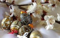 Ramo de Pascua del árbol floreciente de la primavera Fotografía de archivo libre de regalías