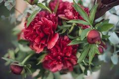 Ramo de peonías rojas Foto de archivo