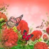 Ramo de peonies rosados Foto de archivo libre de regalías