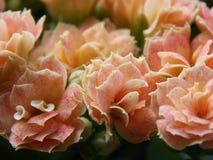 Ramo de pequeña flor rosada Foto de archivo