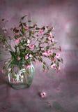 Ramo de pequeñas flores rosadas Foto de archivo libre de regalías