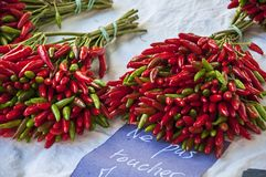 Ramo de pequeñas pimientas rojas Imagenes de archivo