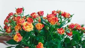 Ramo de pequeñas rosas de las rosas amarillas y rojas Flores de la cosecha de la muchacha en un ramo metrajes