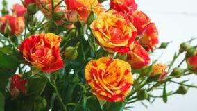 Ramo de pequeñas rosas de las rosas amarillas y rojas se están sacudiendo en el viento almacen de video
