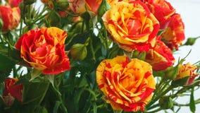 Ramo de pequeñas rosas de las rosas amarillas y rojas tirado de abajo hacia arriba en el movimiento metrajes
