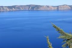 Ramo de pinheiro do lago crater Fotografia de Stock