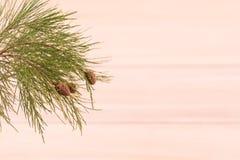 Ramo de pinheiro sobre o fundo de madeira do paulownia Foto de Stock
