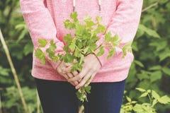 Ramo de plantas en manos Fotos de archivo libres de regalías