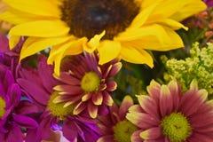 Ramo de primer de las flores Fotografía de archivo