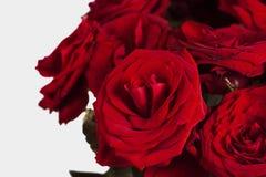 Ramo de primer de las rosas rojas Fotos de archivo
