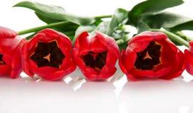 Ramo de primer rojo de los tulipanes imagenes de archivo