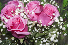 Ramo de primer rosado de las rosas Foto de archivo