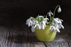 Ramo de primeros snowdrops de las flores de la primavera hermosa Imagenes de archivo