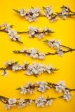 Ramo de ramas de un ?rbol floreciente en un fondo amarillo, minimalismo de la primavera imagen de archivo