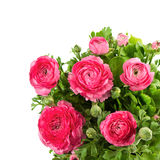 Ramo de ranúnculo del rosa de la primavera Imagen de archivo libre de regalías