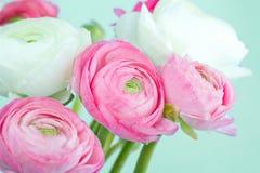 Ramo de ranúnculo rosado y blanco fotos de archivo