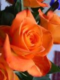 Ramo de remolino anaranjado de las rosas Foto de archivo