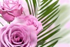 Ramo de rosas imagen de archivo