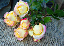 Ramo de rosas Fotos de archivo libres de regalías