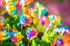 Ramo de rosas coloreadas (el arco iris subió) Imagenes de archivo