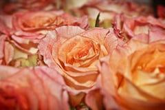 Ramo de rosas coralinas Foto de archivo