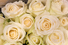 Ramo de rosas crema-blancas Fotografía de archivo