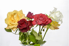 Ramo de rosas de colores variados. Bouquet of roses of various colors on white background Royalty Free Stock Photos