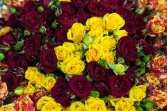 Ramo de rosas multicoloras Imagen de archivo libre de regalías