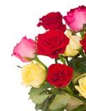 Ramo de rosas multicoloras frescas Imagen de archivo libre de regalías