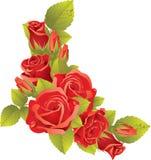 Ramo de rosas rojas Fotos de archivo