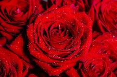 Ramo de rosas rojas con las gotitas de agua brillantes macras foto de archivo