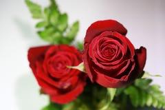 Ramo de rosas rojas en un fondo blanco Fotografía de archivo libre de regalías