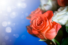 ramo de rosas rojas y blancas Fotografía de archivo libre de regalías