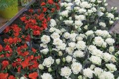 Ramo de rosas rojas y blancas en la tienda Imágenes de archivo libres de regalías