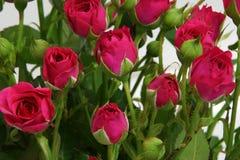 Ramo de rosas rosadas. Fotografía de archivo