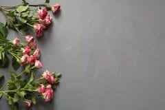 Ramo de rosas rosadas del arbusto en fondo gris Visión superior Copie el espacio Imagen de archivo