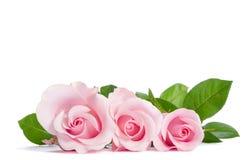 Ramo de rosas rosadas hermosas fotos de archivo libres de regalías