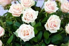 Ramo de rosas rosas claras Fotografía de archivo libre de regalías