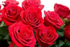 Ramo de Rose Fotografía de archivo libre de regalías