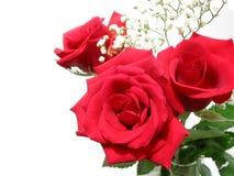 Ramo de Rose en blanco imagen de archivo