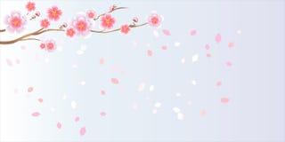 Ramo de sakura com flores Ramo da flor de cerejeira com pétalas Ilustração do Vetor