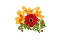 Ramo de tres lirios anaranjados y de zinnias rojos Fotografía de archivo