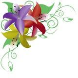 Ramo de tres rosas multicoloras, ornamento de la esquina Foto de archivo
