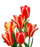 Ramo de tulipán Imagenes de archivo