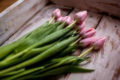 Ramo de tulipán imagen de archivo libre de regalías