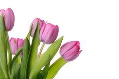 Ramo de tulipanes Fotos de archivo libres de regalías